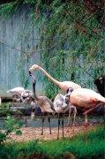 郑州市动物园火烈鸟成功繁殖10只宝宝 7只双角犀鸟