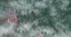 加强林业金融发展,将为林业产业