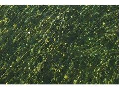 今年青海湖裸鲤蕴藏总量达8.8万吨