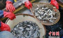 2018年全年太湖渔业捕捞产量达6.9