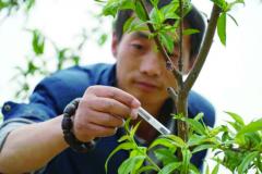 肥东坤之鲜生态园投放200万只瓢虫