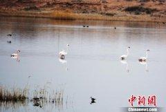 内蒙古磴口县沙金苏木境内天鹅湖
