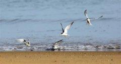 随着海口国家湿地公园保护修复工