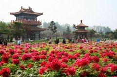 中国花协征求社会意见推荐国花 面