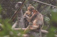 南京红山森林动物园萌萝莉和高冷