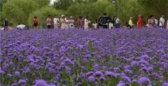 新疆库尔勒体育公园开园 票价每人