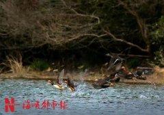 福建鸣溪省级湿地公园已经通过评